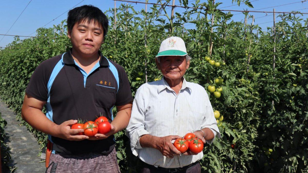 仁武紅翻天蕃茄 產銷履歷食在安心