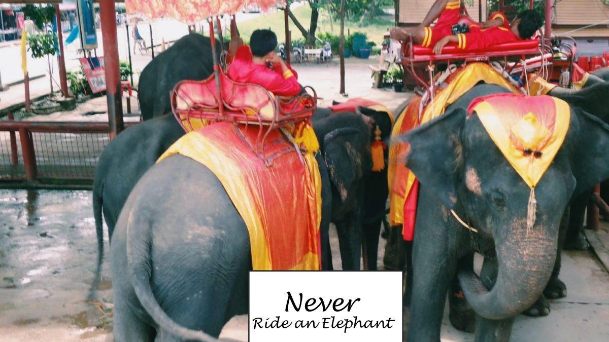 吳哥窟美麗的蛻變 2020年宣布禁騎大象