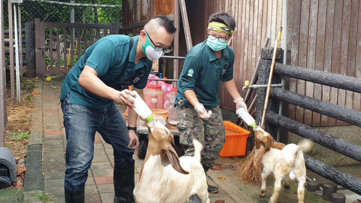 新動物園運動加緊進行 明年9月前完成